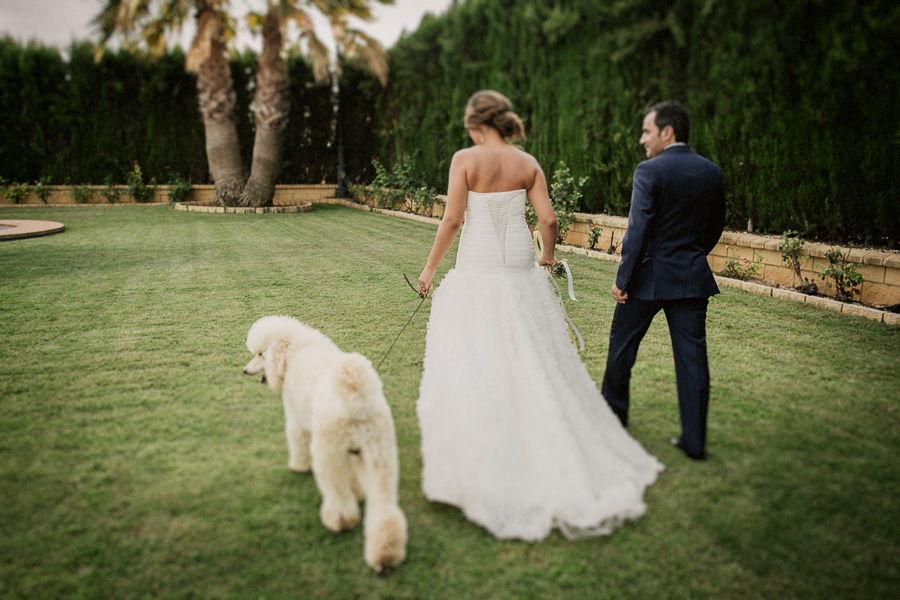 bodas con mascotas